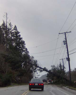 Tree across Sooke Road